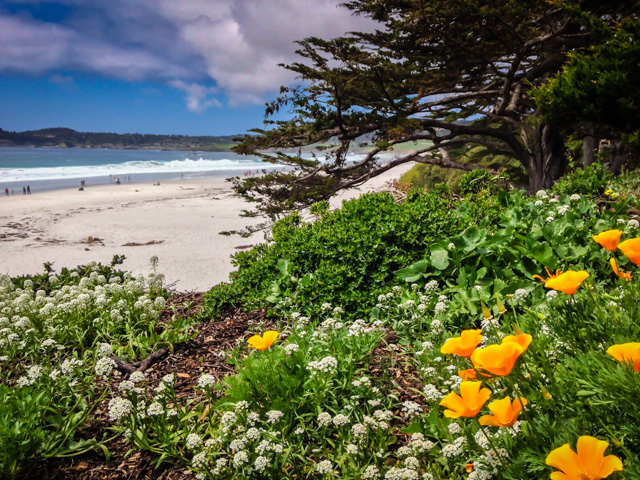 The beach at Carmel - gorgeous!